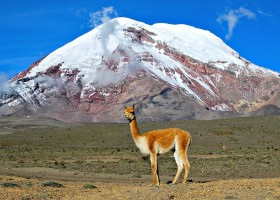 Local Hero Travel rondreis Ecuador chimborazo Ecuador rondreis familie avontuur 40plusteens