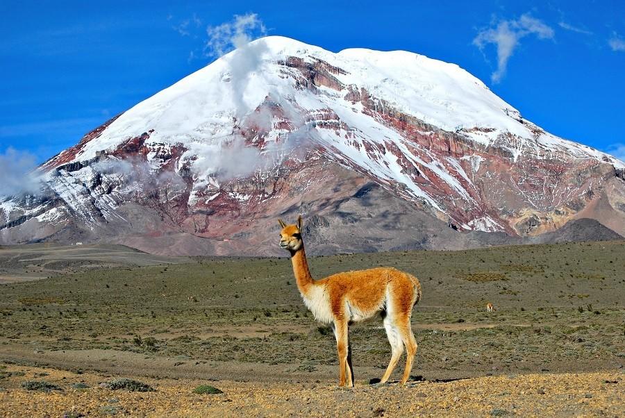 Local Hero Travel rondreis Ecuador chimborazo Ecuador rondreis familie avontuur 40plusteens image gallery