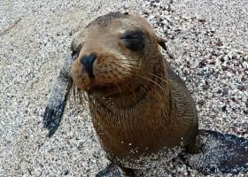 Local Hero Travel rondreis Ecuador Galapagos zeehond Ecuador rondreis familie avontuur 40plusteens