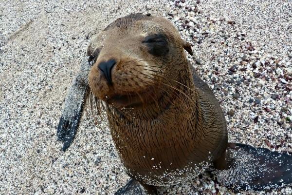Local Hero Travel rondreis Ecuador Galapagos zeehond Ecuador rondreis familie avontuur 40plusteens image gallery