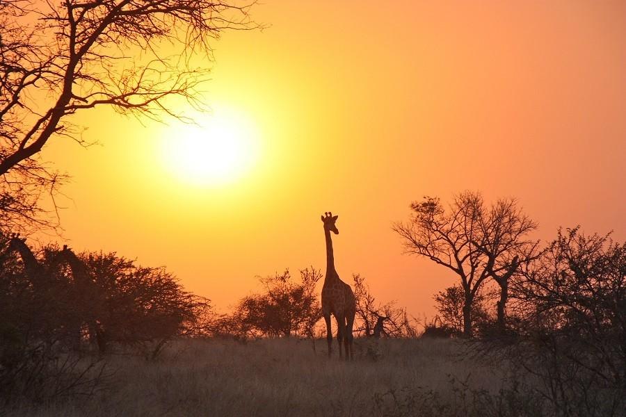 Local Hero Travel giraffe.jpg Local Hero Travel 40plusteens image gallery