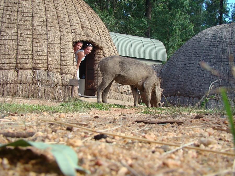 Local Hero Travel miliwane pumba.jpg Local Hero Travel 40plusteens image gallery