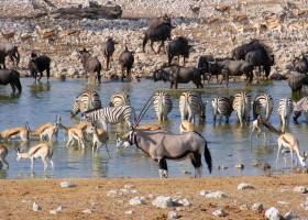 Local Hero Travel rondreis namibie-safari-etosha-2 Namibië rondreis familie avontuur 40plusteens