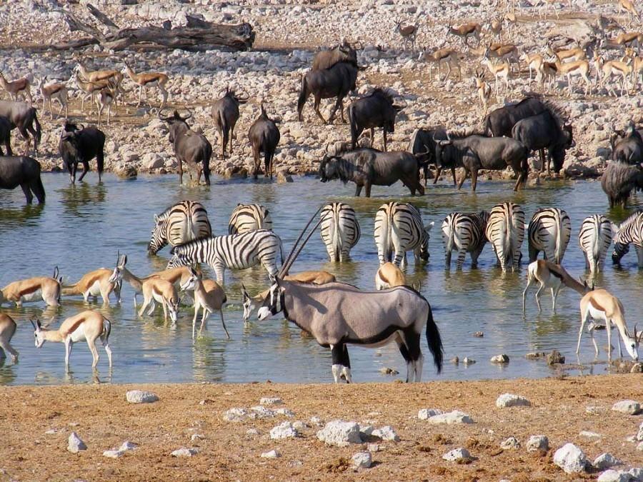 Local Hero Travel rondreis namibie-safari-etosha-2 Namibië rondreis familie avontuur 40plusteens image gallery