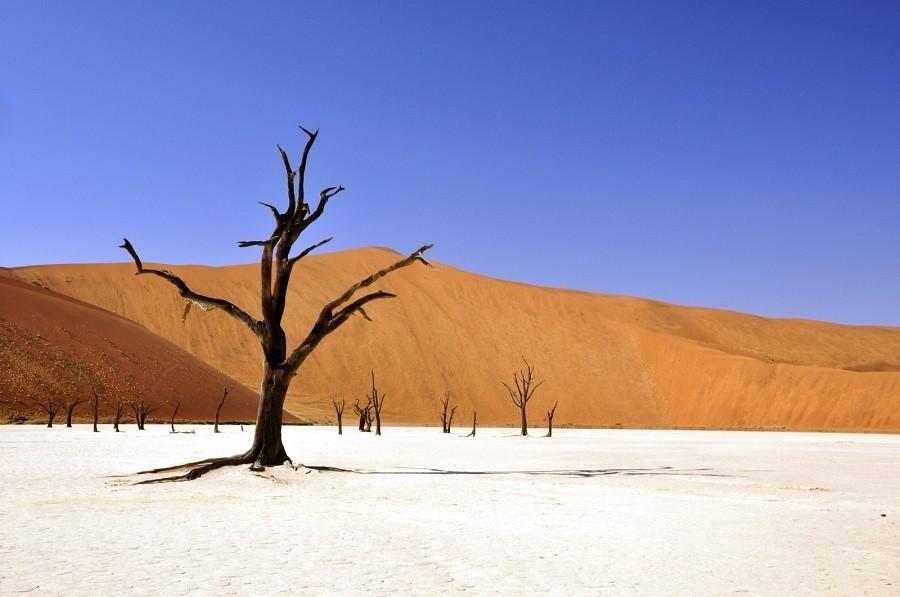 Local Hero Travel rondreis Afrika Namibie deadvlei Namibië rondreis familie avontuur 40plusteens image gallery