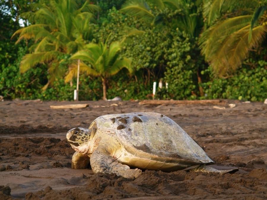 costa-rica-rondreis-tortuguero-national-park