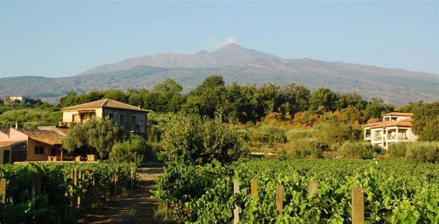 Tenuta Madonnina op Sicilie, Italie druivenranken Eliza was here 40plusteens image gallery