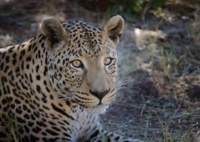 Local Hero Travel rondreis namibie-luipaard Namibië rondreis familie avontuur 40plusteens